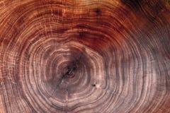 Tronco de árbol de madera del corte de la textura imagen de archivo
