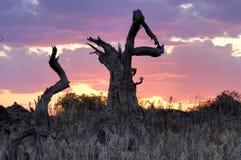 Tronco de árbol muerto Imagen de archivo libre de regalías