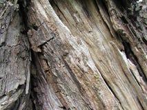 Tronco de árbol muerto Imagenes de archivo