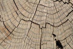 Tronco de árbol muerto de pino Fotografía de archivo libre de regalías