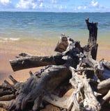 Tronco de árbol muerto en la playa foto de archivo