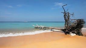 Tronco de árbol muerto en la playa tropical almacen de metraje de vídeo