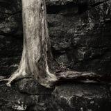 Tronco de árbol muerto viejo imagen de archivo