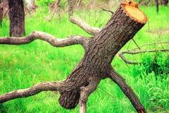 Tronco de árbol o gancho desnudo con las ramas que mienten en la hierba verde en el parque foto de archivo