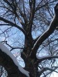 Tronco de árbol poderoso debajo de la nieve fotografía de archivo
