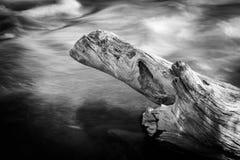 Tronco de árbol por el río Fotografía de archivo libre de regalías