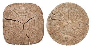Tronco de árbol que muestra los anillos de crecimiento imagenes de archivo
