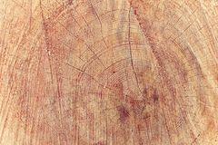 Tronco de árbol que muestra los anillos de crecimiento imágenes de archivo libres de regalías