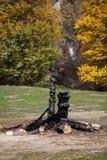 Tronco de árbol quemado fotografía de archivo libre de regalías