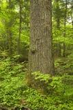 Tronco de árbol, rastro de naturaleza del motor, Smokies Imágenes de archivo libres de regalías