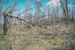 Tronco de árbol roto por el fuerte viento imagenes de archivo
