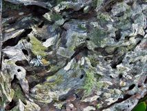tronco de árbol Termita-dañado fotos de archivo