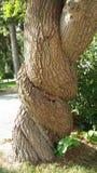 Tronco de árbol torcido fotografía de archivo