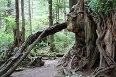 Tronco de árbol torcido Imagen de archivo libre de regalías