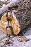 Tronco de árbol truncado enganchado a una cadena fotografía de archivo libre de regalías