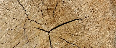 Tronco de árbol viejo de madera de pino Ring Fiber Texture Closeup Imagen de archivo libre de regalías