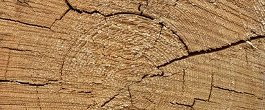 Tronco de árbol viejo de madera de pino Ring Fiber Texture Closeup Fotografía de archivo libre de regalías