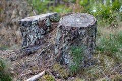 Tronco de árbol viejo en los registros de madera cubiertos de musgo de un bosque de hojas caducas que mienten adentro fotos de archivo