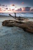 Tronco de árbol viejo en una playa fotografía de archivo libre de regalías