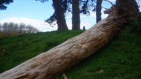 Tronco de árbol viejo de la descomposición en granja imagen de archivo