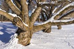 Tronco de árbol y ramas de árbol foto de archivo libre de regalías