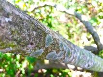 Tronco de árboles con el hongo Foto de archivo
