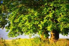 Tronco de árvore imagens de stock royalty free