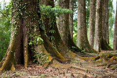 Tronco de árvore Imagem de Stock