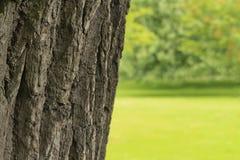 Tronco de árvore Fotografia de Stock