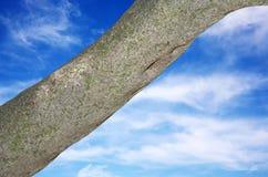 Tronco de árvore foto de stock royalty free