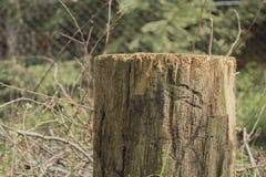 Tronco de árvore Fotos de Stock