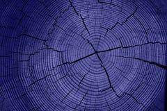 Tronco de árvore azul fotografia de stock royalty free
