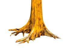 Tronco de árvore de Brown com as raizes isoladas no fundo branco Foto de Stock