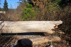 Tronco de árvore caído Imagem de Stock Royalty Free