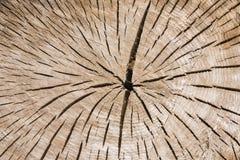 Tronco de árvore com anéis anuais e grão de madeira Fotografia de Stock