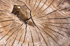 Tronco de árvore com anéis anuais e grão de madeira bonita Fotografia de Stock