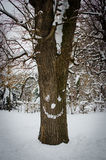 Tronco de árvore com a cara nevado no inverno Imagem de Stock