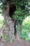 Tronco de árvore com furo entalhado imagens de stock