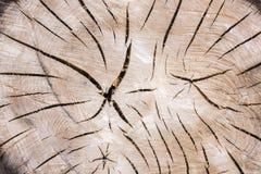 Tronco de árvore com grão de madeira bonita e anéis anuais Foto de Stock