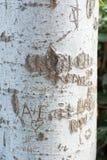 Tronco de árvore com palavra do entalhe Fotos de Stock