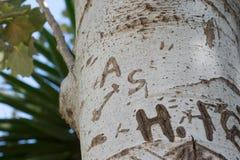 Tronco de árvore com palavra do entalhe Imagens de Stock