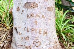 Tronco de árvore com palavra do entalhe Foto de Stock