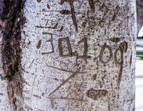 Tronco de árvore com palavra do entalhe Fotos de Stock Royalty Free