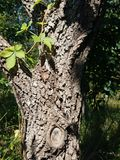Tronco de árvore com sombra imagens de stock