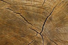 tronco de árvore com uma estrutura imagem de stock