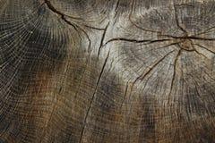 tronco de árvore com uma estrutura foto de stock royalty free