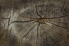 tronco de árvore com uma estrutura imagens de stock royalty free