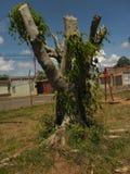 Tronco de árvore de Cutted fotografia de stock royalty free