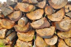 Tronco de árvore da textura fotografia de stock