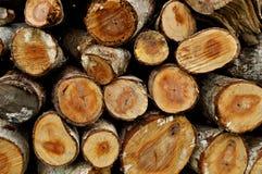 Tronco de árvore da textura fotos de stock royalty free
